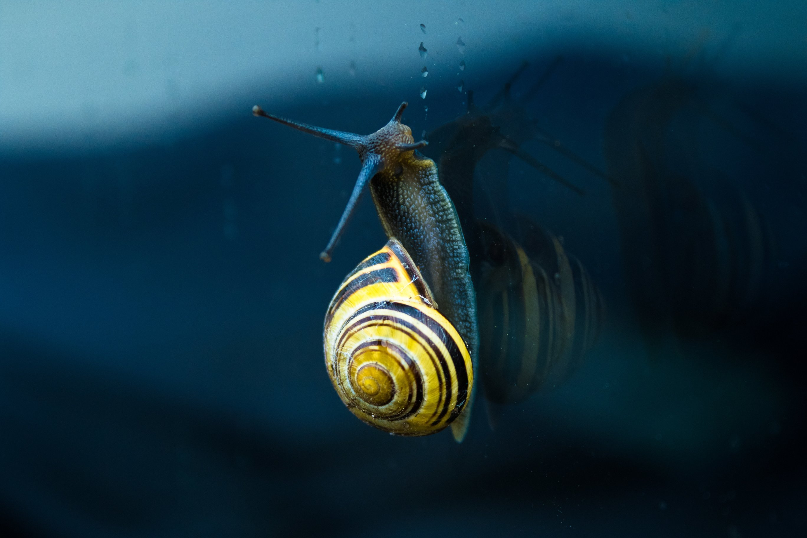 I'm A Snail, Are You?